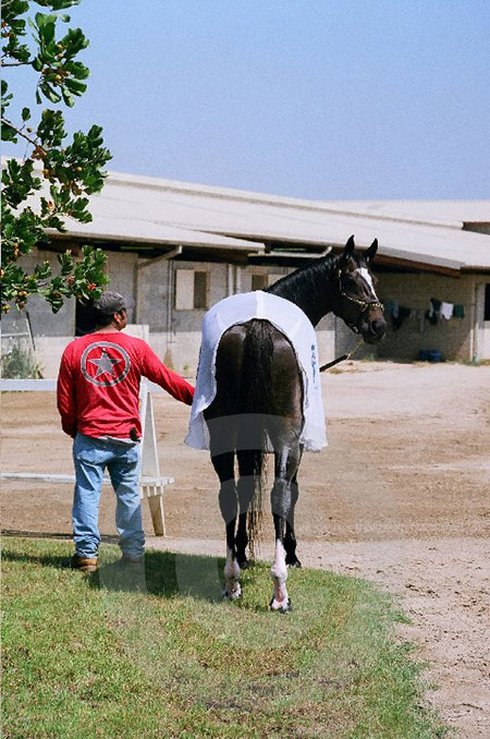 Zenyatta Looking Back