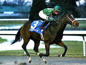 Mac the Man wins the 2013 Turfway Park Prevue.