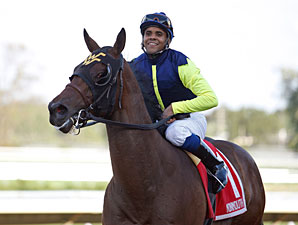 Madman Diaries wins the 2010 Sapling.