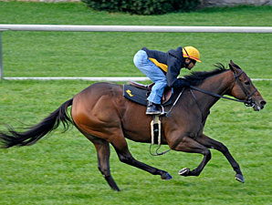 Magoo works at Keeneland 10/24/2011.