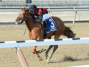 """Majestic Affair wins the 2015 Fred """"Cappy"""" Capossela Stakes."""