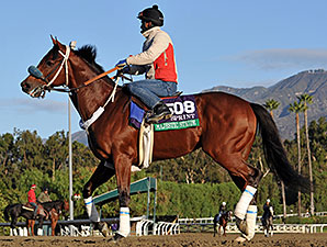Majestic Stride - 2013 Breeders' Cup, October 29, 2013.
