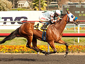 Majestic Stride wins the 2013 Vernon O. Underwood.