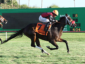 Major Magic wins the 2012 Jack Coady, Sr. Stakes.