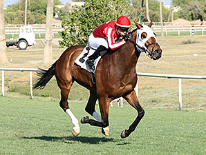 Mambo Man wins the 2014 Wildcat Handicap.