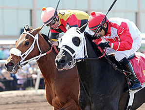 Mancation wins the New Mexico Breeders' Derby.