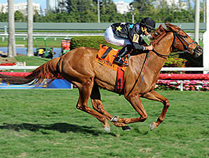 Manchurian High wins the 2015 Florida Sunshine Millions Turf Stakes.
