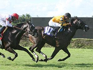 Manicero wins the 2011 Needles.
