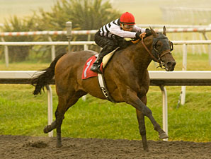 Mast Track wins the 2009 Native Diver.