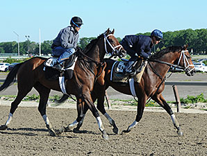 Matterhorn and Commissioner jog at Belmont Park on June 1, 2014.