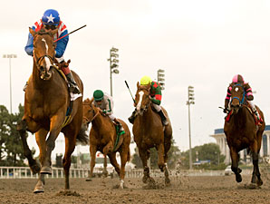 May Day Rose wins the 2010 Sharp Cat.