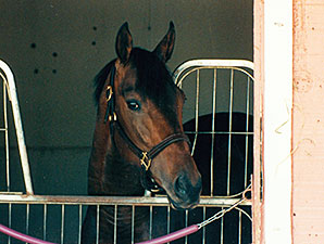 Mecke in his stall.