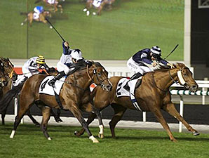 Medicean Man wins the 2014 Meydan Sobha Phase II.