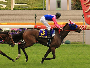 Meisho Mambo wins the Yushun Himba.