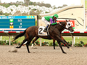 Merit Man wins the 2014 Green Flash Handicap.