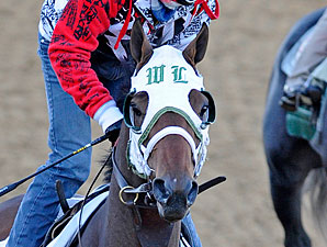 Mine That Bird working at Churchill Downs.