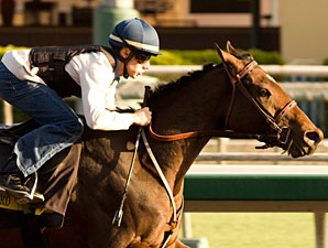 Mine That Bird works at Santa Anita on October 6, 2009.