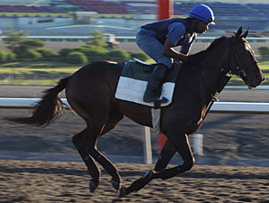 Mobthewarrior at Woodbine on July 3, 2010.