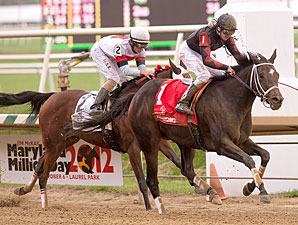 Motherload Hipster wins the 2012 Maryland Million Distaff Starter Handicap.