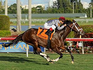 Mshawish wins the 2014 El Prado Stakes.