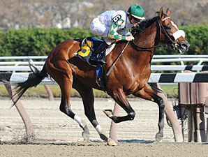 Mucho Macho Man AOC Aqueduct November 9, 2011