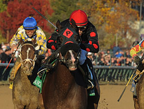 Musical Romance wins the 2011 Breeders' Cup Filly & Mare Sprint.