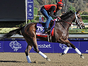My Conqestadory - 2013 Breeders' Cup, October 29, 2013.