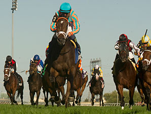 My Conquestadory wins the 2013 Summer Stakes.