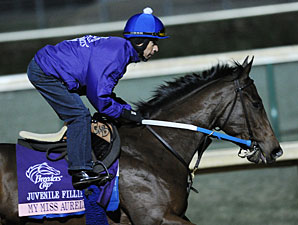My Miss Aurelia at Churchill Downs, October 30, 2011.