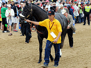 Mylute - Walkover, Preakness Stakes