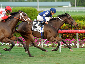 Mystic Love wins the 2012 Dania Beach.