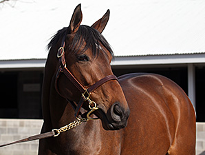 Nereid at the Keeneland January Sale.