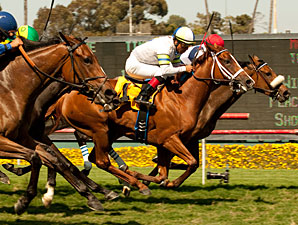 Nereid and Cambina deadheat in the 2011 American Oaks.