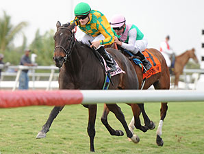 Never Retreat wins the 2011 Honey Fox.