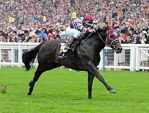 No Nay Never wins the 2013 Norfolk Stakes at Royal Ascot.