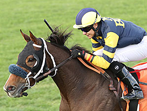Of Royalty wins the 2013 Chandler Stakes.