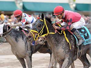 Off the Jak wins the 2013 Sunshine Millions Sprint.