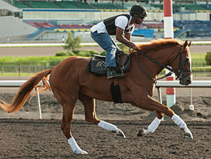 One Destiny preps for the Queen's Plate at Woodbine, July 3, 2014