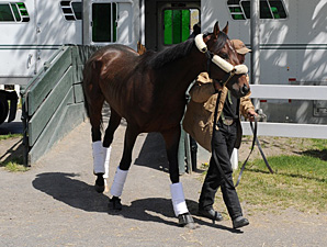 Orb arrives at Belmont Park following the Kentucky Derby 5/5/2013.