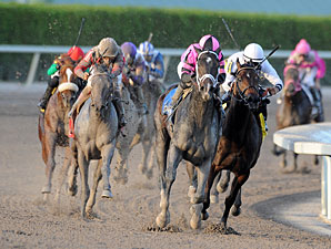 Orb wins the 2013 Fountain of Youth.