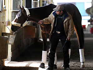 Orb in his shedrow at Belmont Park.