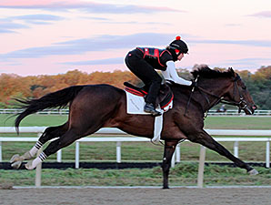 Orb works at Fair Hill Training Center on 09/23/2013.