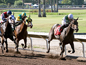Ourwestcoastghost wins the 2013 Casual Lies Handicap.