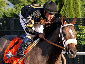 Oxbow finishes second in the Belmont Stakes.