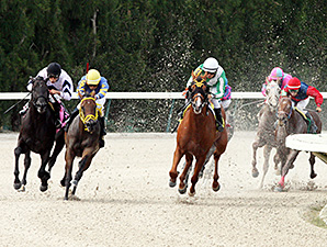 Pachanga Party wins the 2013 Birdonthewire Stakes.