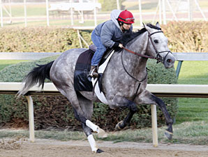 Paddy O'Prado works towards the Breeders' Cup Oct. 24, 2010.