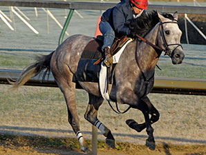 Paddy O'Prado works at Churchill Downs on Oct. 30, 2010.