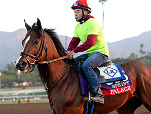 Palace - Breeders' Cup 2014