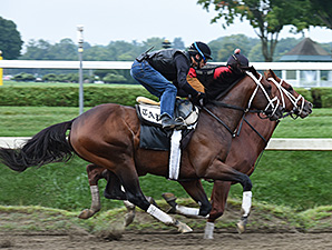 Palace Malice at Saratoga 8/24/2014.