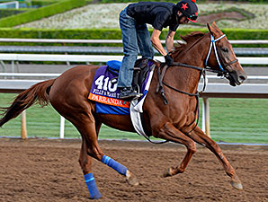 Parranda works towards the Breeders' Cup.